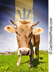 Cow with flag on background series - Barbados