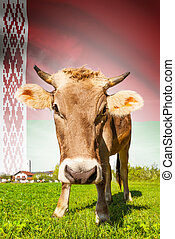 Cow with flag on background series - Belarus