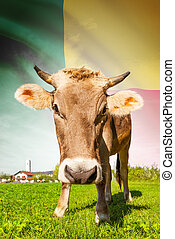 Cow with flag on background series - Benin