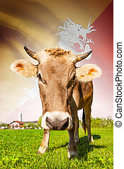 Cow with flag on background series - Bhutan