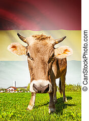 Cow with flag on background series - Bolivia