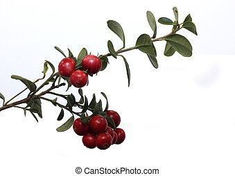 Cowberries with leafs