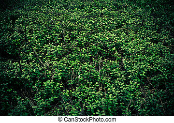 Cowberry background