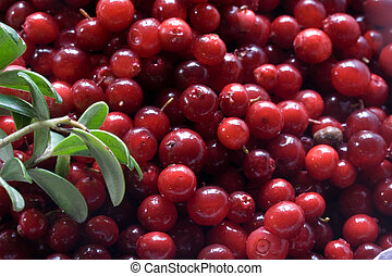 lots of red cowberries as a background