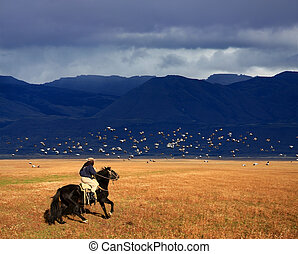 Cowboy - A gaucho riding his horse in Patagonia, Argentina