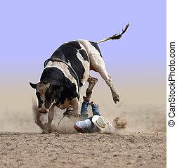 Cowboy Bites the Dust