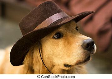 cowboy dog - cute dog wearing cowboy hat