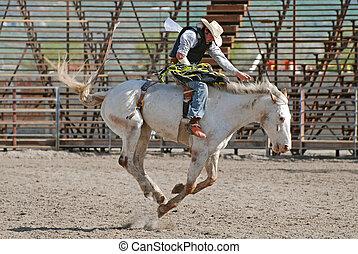 Cowboy on Bronc
