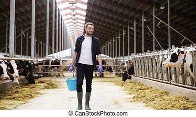 cows and man with bucket of hay walking at farm -...