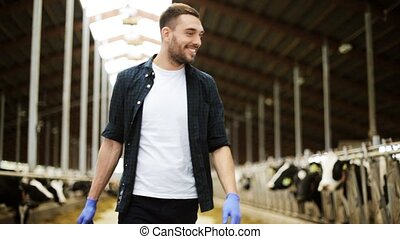 cows and man with bucket walking along farm - agriculture...