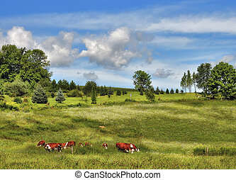 Cows at green landscape