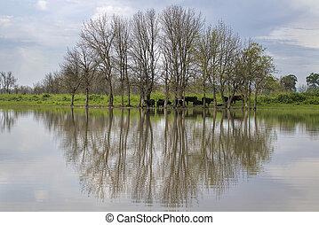 Cattle Farm at Sauvie Island