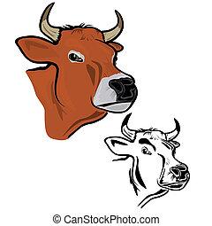 cow's, cabeça