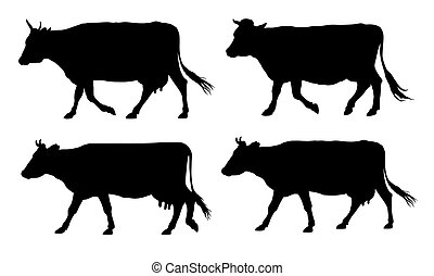 Cows - Vector illustration of wlking cows silhouettes