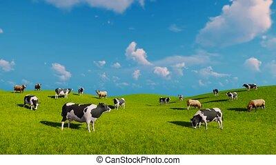 Cows graze on open green meadows
