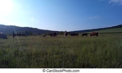 Cows grazing in a meadow.