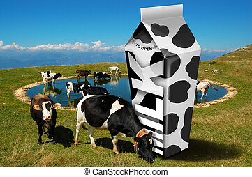 Cows grazing - Milk packaging - White carton milk with black...