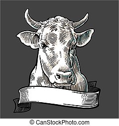 Cows head with ribbon. Hand drawn in a graphic style. Vintage vector engraving illustration for info graphic, poster, web. Isolated on white background.