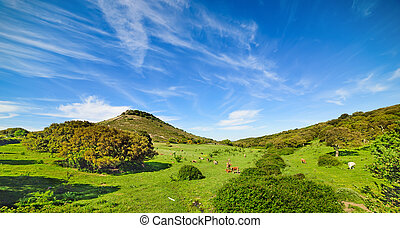 cows in a green field