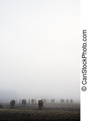 Cows in Fog