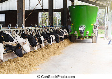 Cows in stable eating with green feed tanker