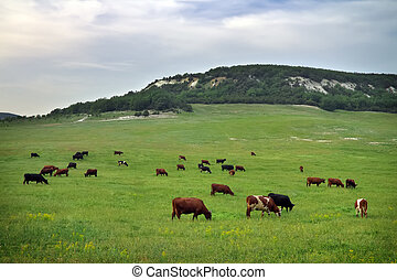 Cows on green meadow. Nature composition