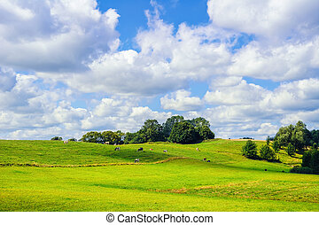 Cows on the Pasture Land