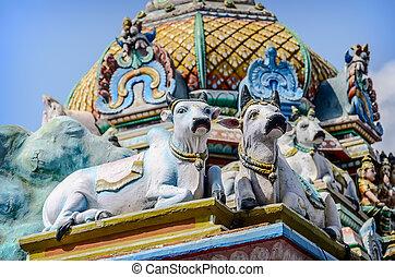 cows., szczegół, świątynia, indianin, kapaleeswarar