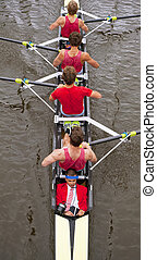 coxed, vier