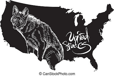 Coyote and U.S. outline map. Black and white vector illustration. Canis latrans.
