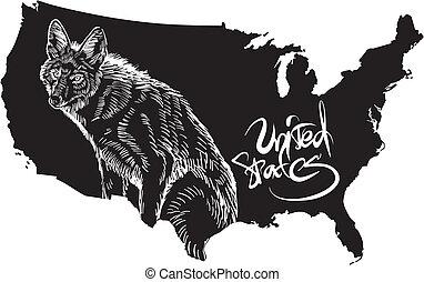 coyote, etats-unis, contour, carte