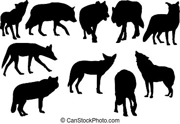 Coyote Silhouette vector illustration