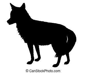 coyote, silueta