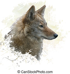 Coyote watercolor - digital painting of coyote portrait