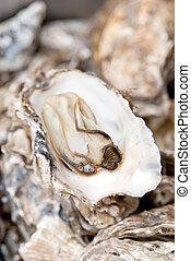 cozinhado, ostras