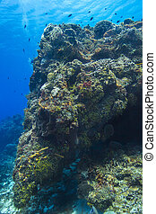 cozumel, 珊瑚礁