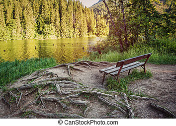 Cozy bench in the forest near the lake with roots of trees under your feet. A picturesque place to relax.