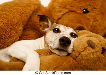 cozy  dog in bed with teddy bear