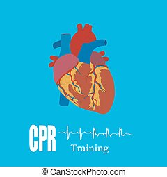 CPR training, vector illustration