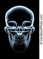 cráneo, -, humano, frente, radiografía, vista