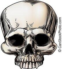 cráneo humano, ilustración