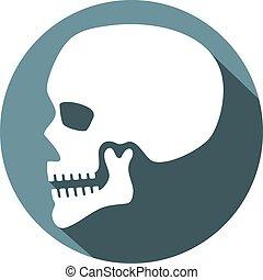 cráneo humano, perfil, plano, icono