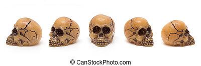 cráneos, cinco, perspectivas