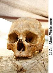crâne, 1