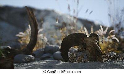 crâne, désert, mort, marteau