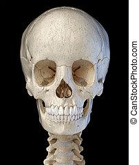 crâne, informatique, affiché, artwork., humain, front.