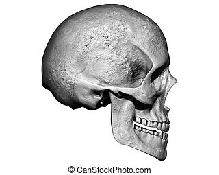 crâne, isolé, 3d, tête, render, fond