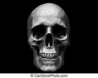 crâne, isolé, humain, 3d, tête, render, fond