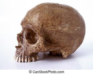 crâne, mâchoire, dehors