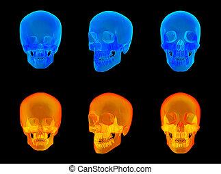 crâne, render, humain, x rayon, 3d